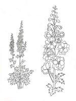Larkspur-flower-coloring-pages-1