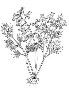 Larkspur-flower-coloring-pages-7