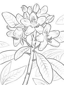 Laurel-flower-coloring-pages-2