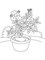 Laurel-flower-coloring-pages-6