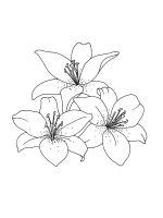 Lilies-coloring-pages-18