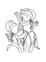 Lilies-coloring-pages-19
