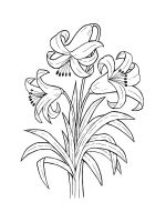 Lilies-coloring-pages-21
