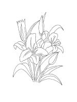 Lilies-coloring-pages-22