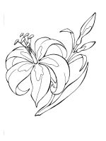 Lilies-coloring-pages-23