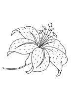 Lilies-coloring-pages-26