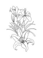 Lilies-coloring-pages-27