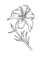 Lilies-coloring-pages-29