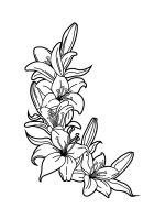 Lilies-coloring-pages-31