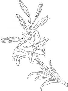 Lilies-flower-coloring-pages-10