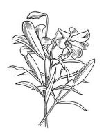 Lilies-flower-coloring-pages-13