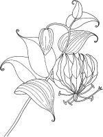 Lilies-flower-coloring-pages-7