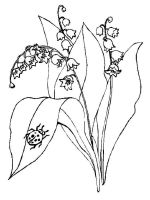 Lily-of-the-valley-flower-coloring-pages-11