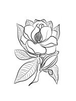 Magnolia-coloring-pages-14