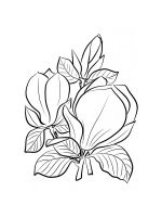 Magnolia-coloring-pages-15