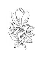 Magnolia-coloring-pages-16