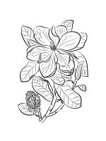 Magnolia-coloring-pages-17