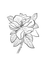 Magnolia-coloring-pages-18