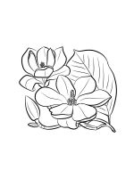 Magnolia-coloring-pages-20