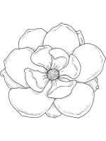 Magnolia-flower-coloring-pages-1