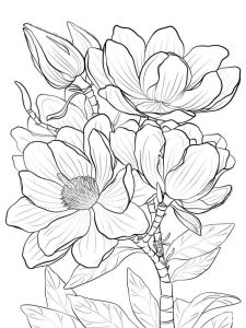 Magnolia-flower-coloring-pages-2