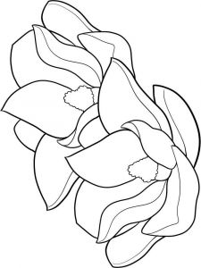 Magnolia-flower-coloring-pages-3