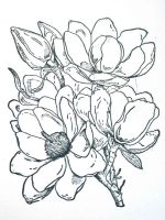 Magnolia-flower-coloring-pages-4