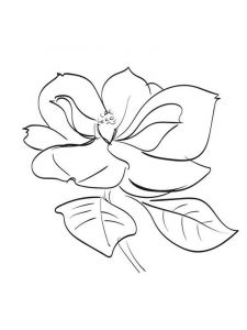 Magnolia-flower-coloring-pages-5