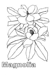 Magnolia-flower-coloring-pages-6