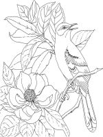 Magnolia-flower-coloring-pages-8