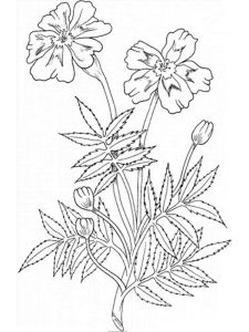 Marigolds-flower-coloring-pages-10