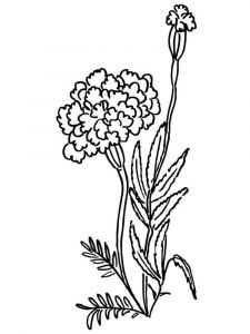 Marigolds-flower-coloring-pages-6