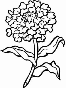 Marigolds-flower-coloring-pages-7
