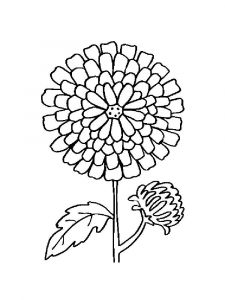 Marigolds-flower-coloring-pages-9