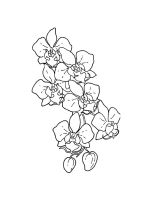 Orchid-coloring-pages-18