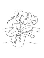 Orchid-coloring-pages-20