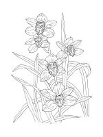 Orchid-coloring-pages-22