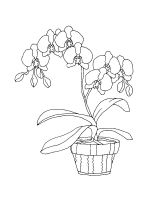 Orchid-coloring-pages-23