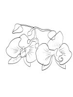 Orchid-coloring-pages-24