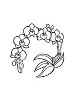 Orchid-coloring-pages-26