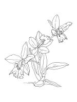Orchid-coloring-pages-27