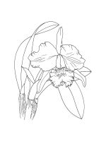 Orchid-coloring-pages-28
