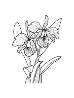 Orchid-coloring-pages-30