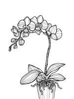 Orchid-coloring-pages-32