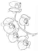 Orchid-flower-coloring-pages-10