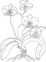 Orchid-flower-coloring-pages-13