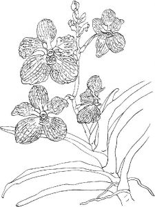Orchid-flower-coloring-pages-16