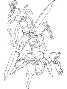 Orchid-flower-coloring-pages-2