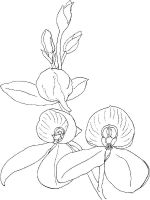 Orchid-flower-coloring-pages-7