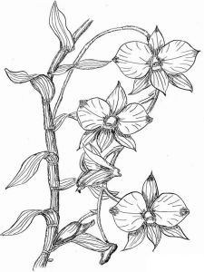 Orchid-flower-coloring-pages-8